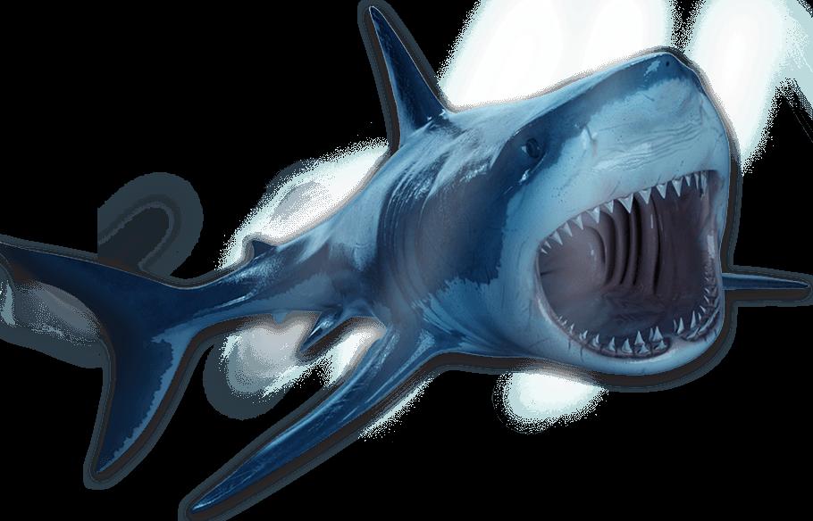 Construis pas à pas ton grand requin blanc