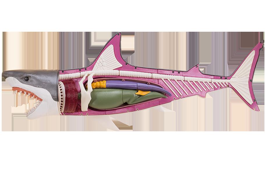 sliderImgPrincipal_464_1-slider-png-requin-910x584-2_1552466780126